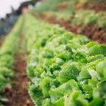 Soirée découverte sur l'atout de la permaculture dans votre potager