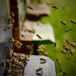 Formation d'apiculture à La Finca