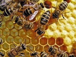 du miel apiculture