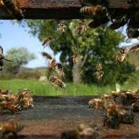 La Finca, tout un projet: pourquoi des abeilles dans le potager de la Finca?